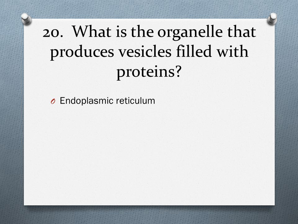 20. What is the organelle that produces vesicles filled with proteins