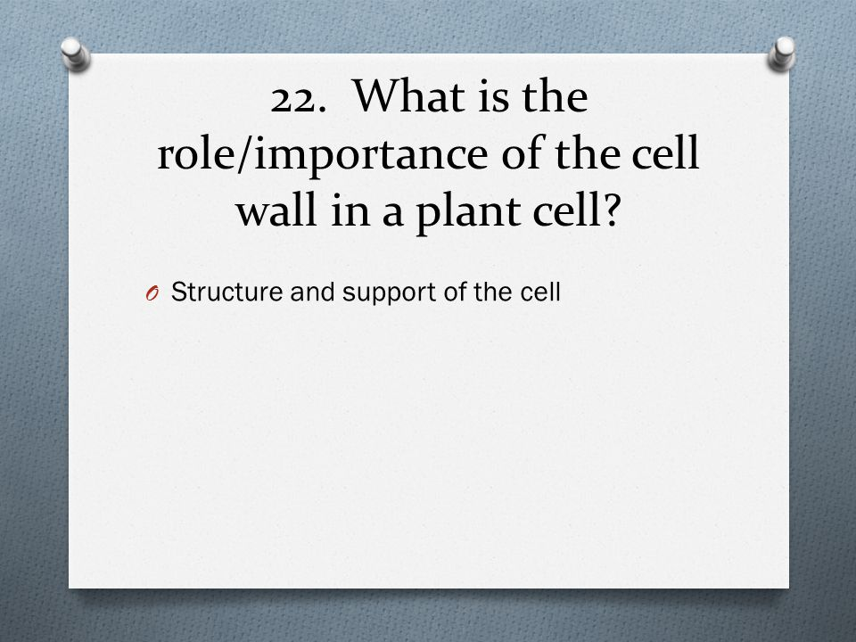 22. What is the role/importance of the cell wall in a plant cell
