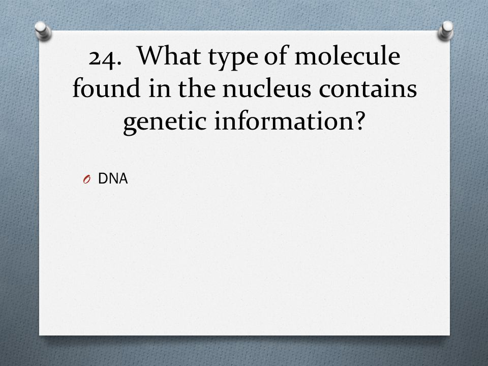 24. What type of molecule found in the nucleus contains genetic information
