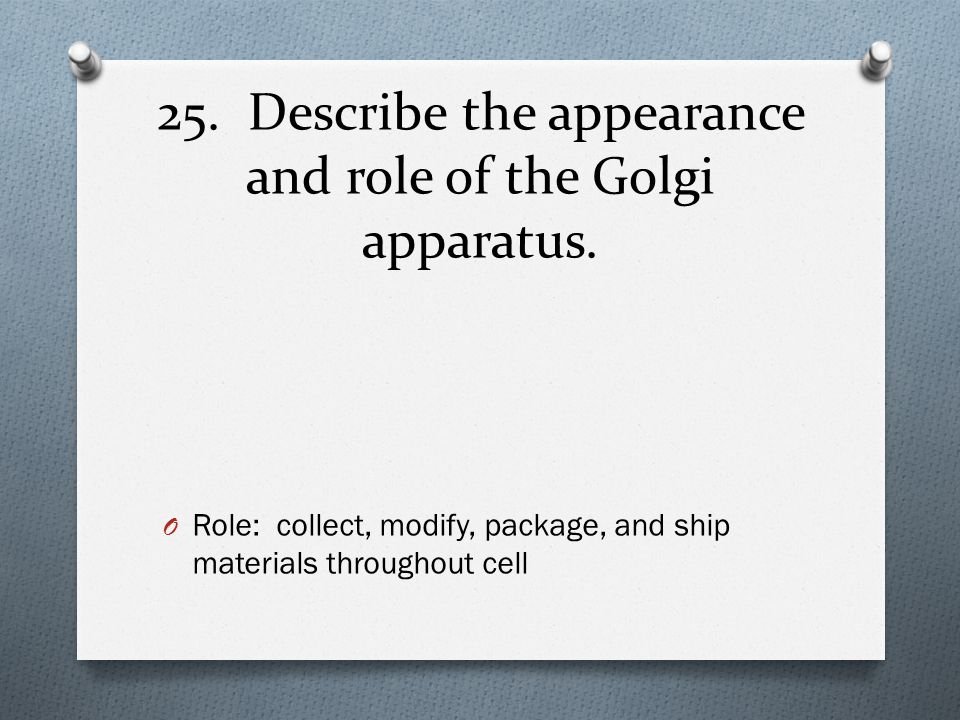 25. Describe the appearance and role of the Golgi apparatus.