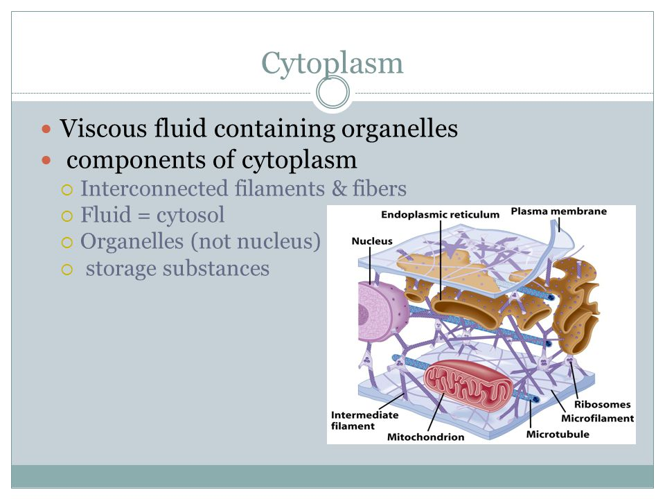 Cytoplasm Viscous fluid containing organelles components of cytoplasm