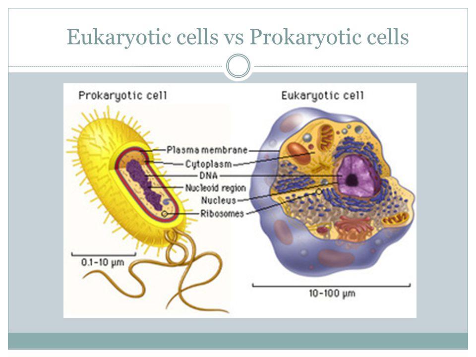 Eukaryotic cells vs Prokaryotic cells