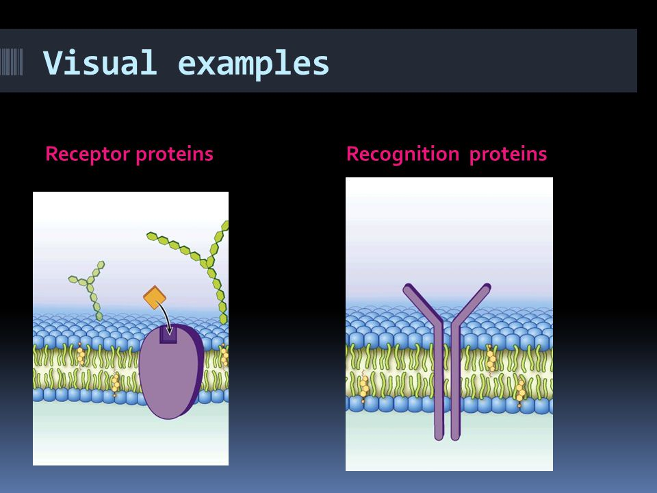 Visual examples Receptor proteins Recognition proteins