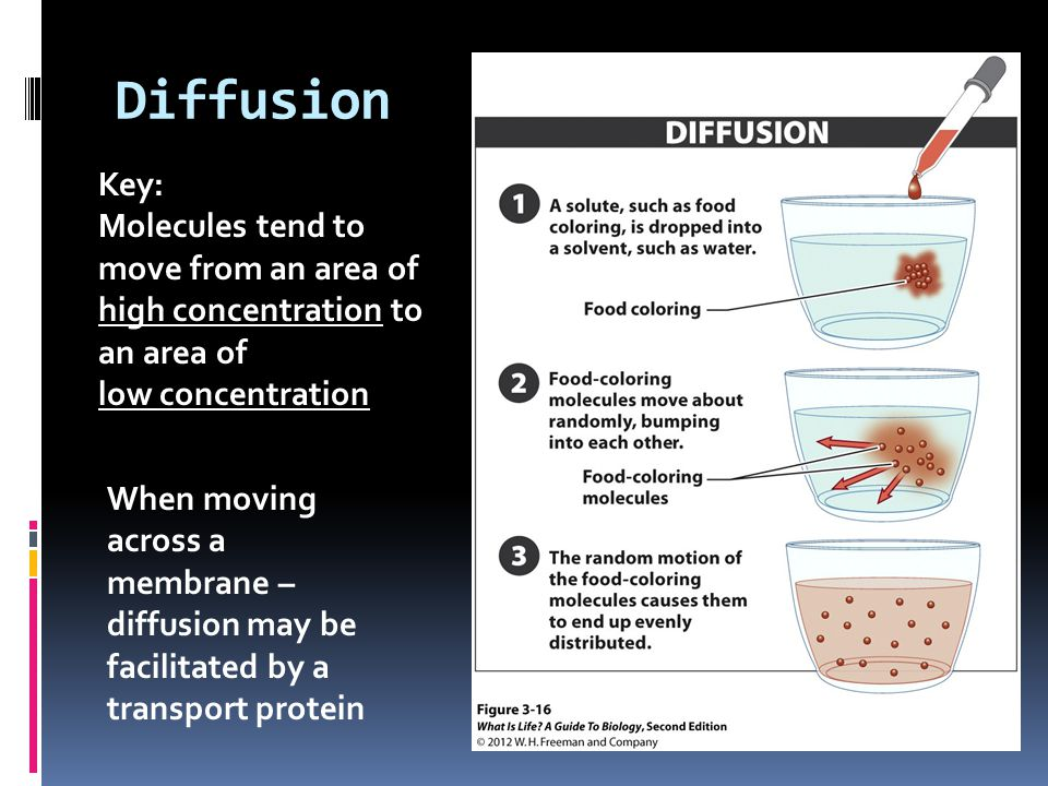 Diffusion Key: Molecules tend to move from an area of