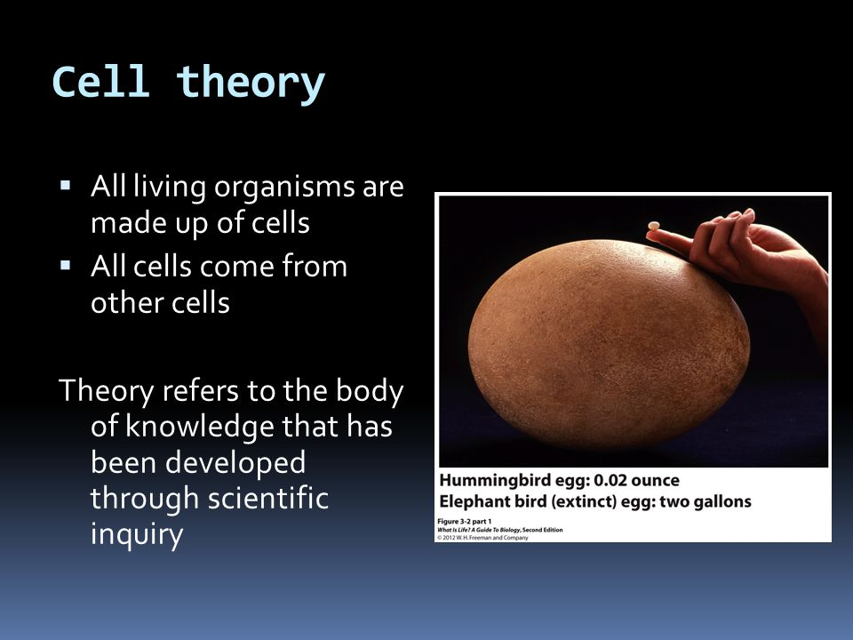 Cell theory All living organisms are made up of cells
