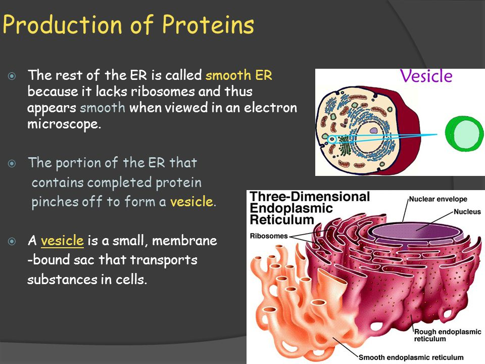 Production of Proteins
