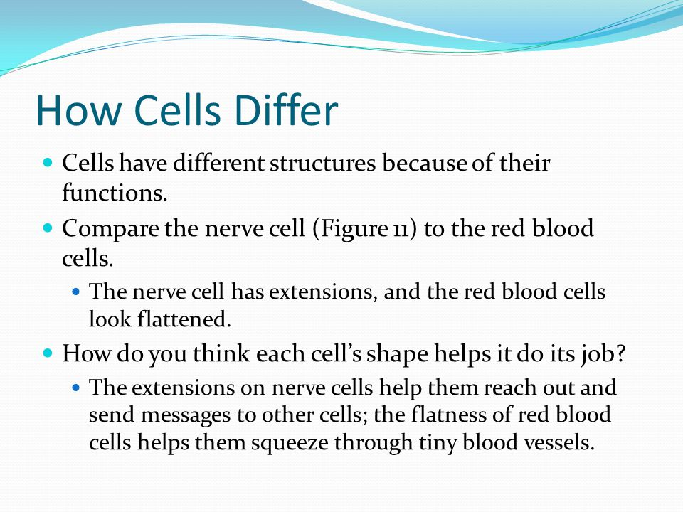 How Cells Differ Cells have different structures because of their functions. Compare the nerve cell (Figure 11) to the red blood cells.