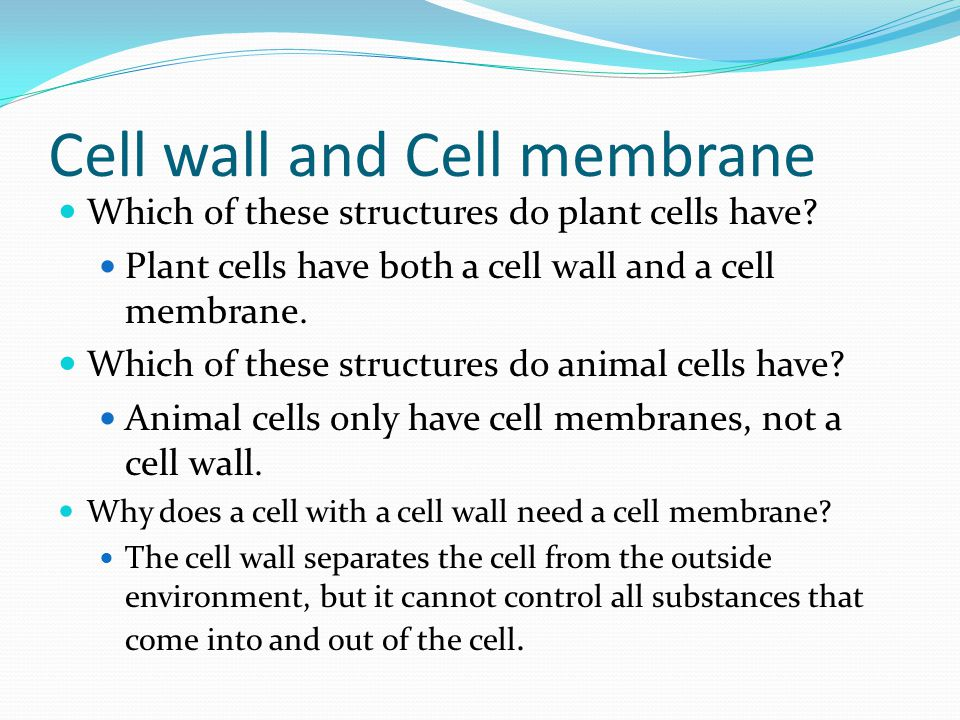Cell wall and Cell membrane