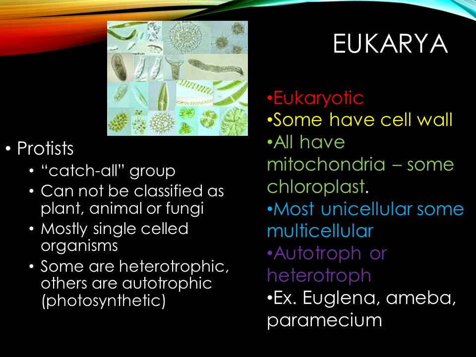 Eukarya Eukaryotic Some have cell wall Protists