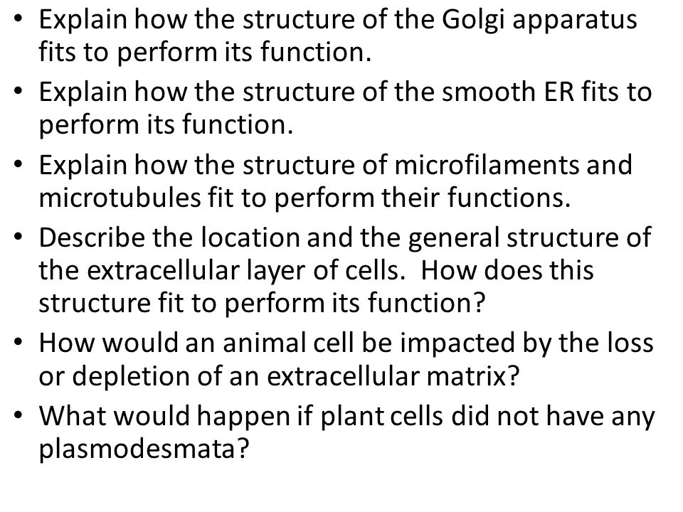 Explain how the structure of the Golgi apparatus fits to perform its function.