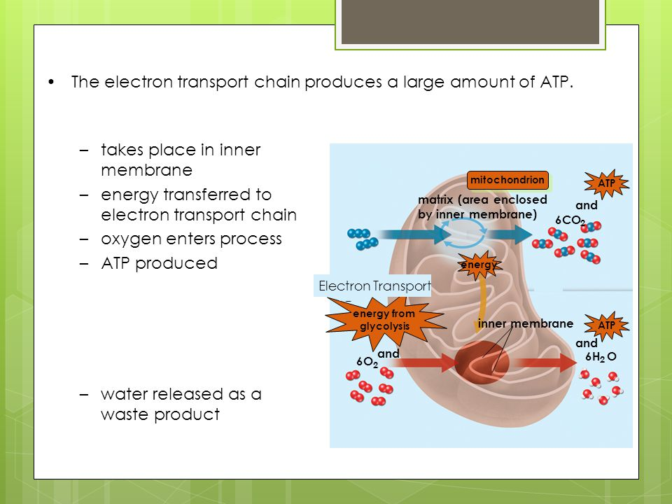 energy from glycolysis