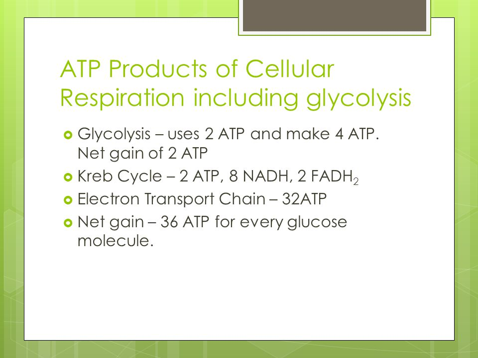ATP Products of Cellular Respiration including glycolysis