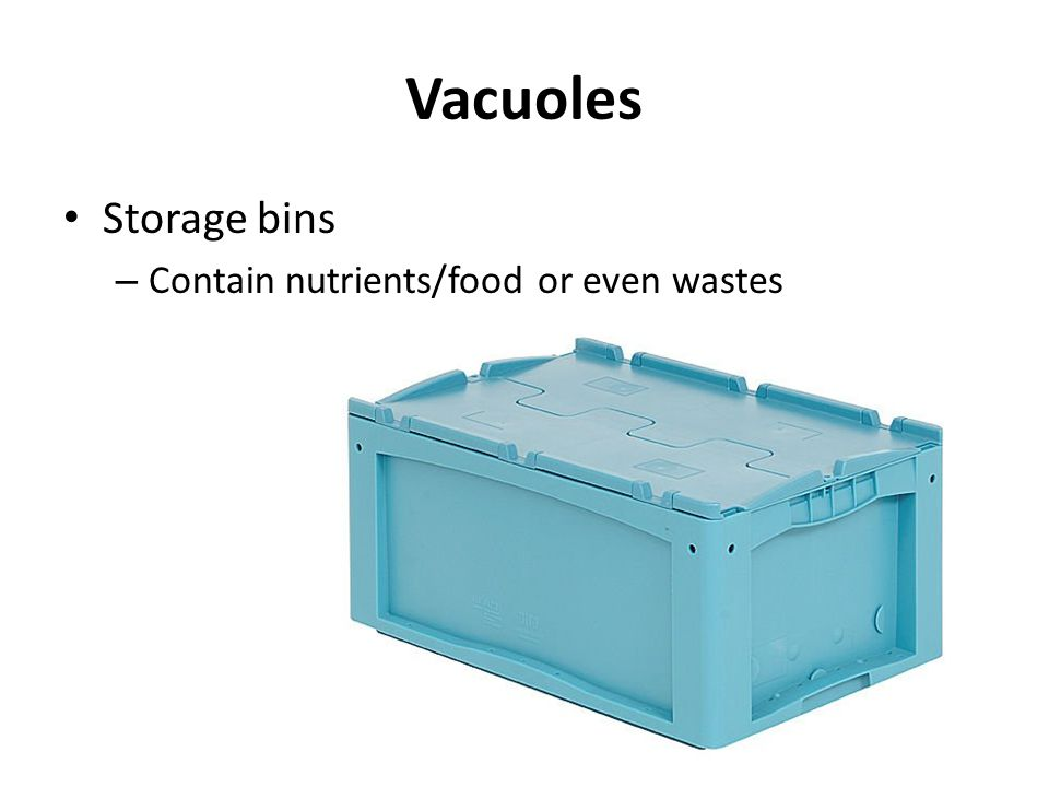 Vacuoles Storage bins Contain nutrients/food or even wastes
