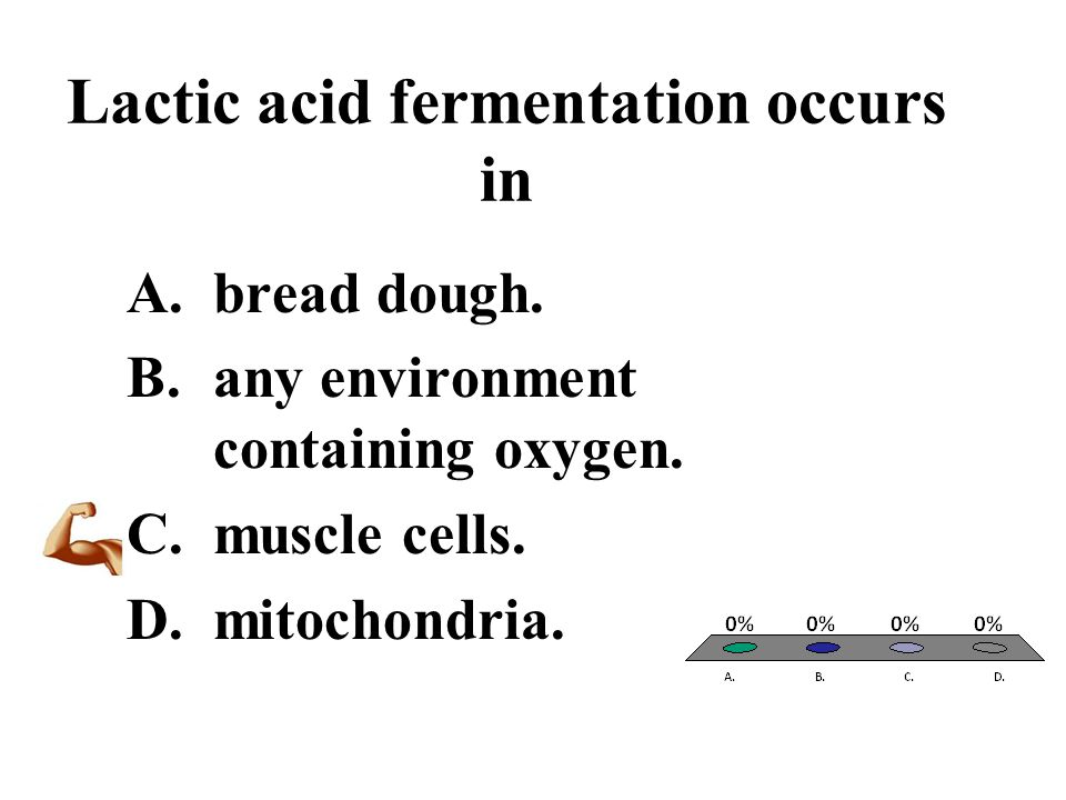 Lactic acid fermentation occurs in