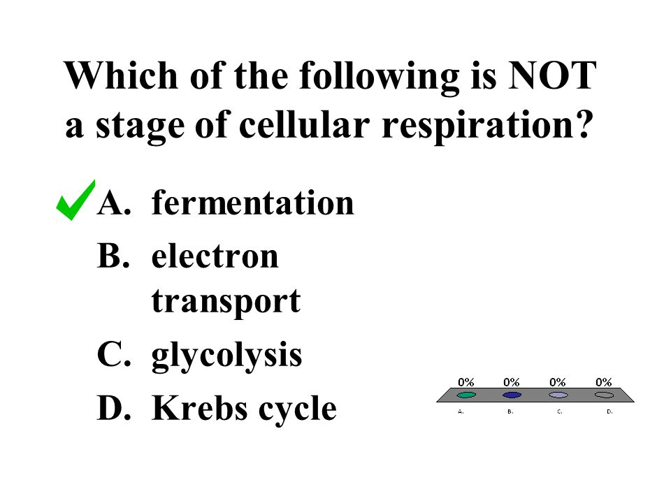 Which of the following is NOT a stage of cellular respiration