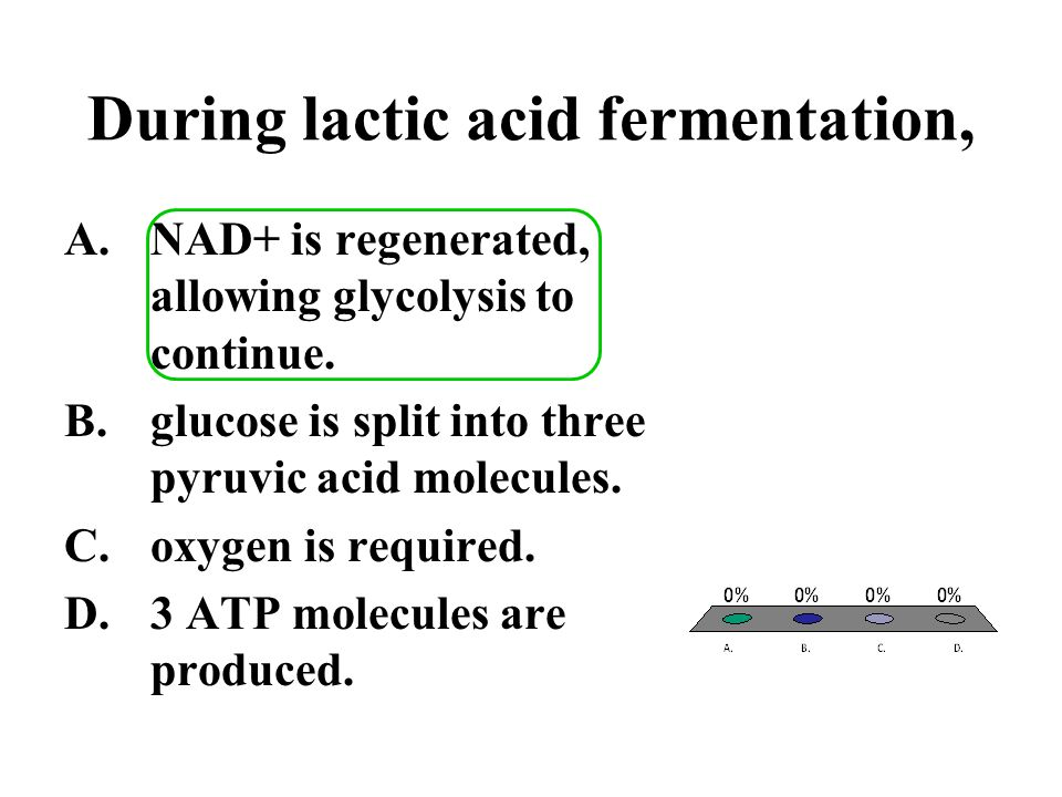 During lactic acid fermentation,