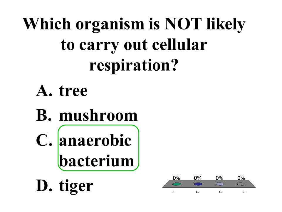 Which organism is NOT likely to carry out cellular respiration