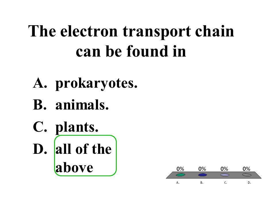 The electron transport chain can be found in
