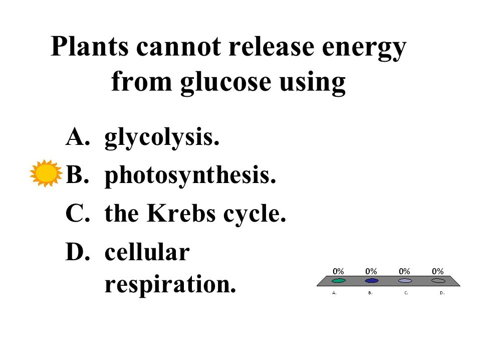 Plants cannot release energy from glucose using