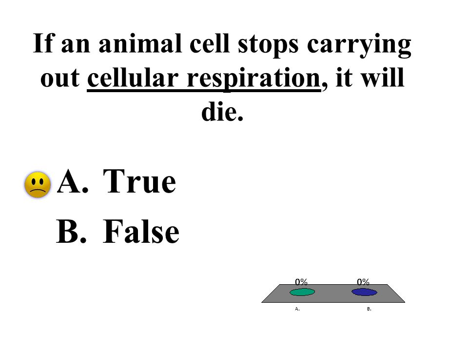 If an animal cell stops carrying out cellular respiration, it will die.