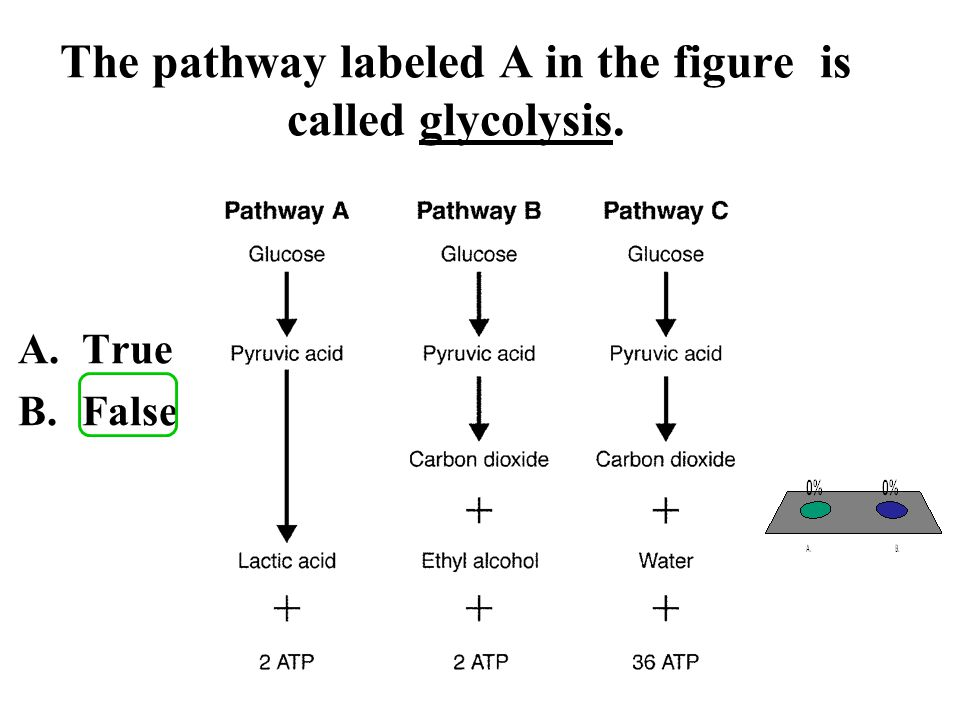 The pathway labeled A in the figure is called glycolysis.