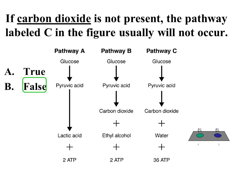 If carbon dioxide is not present, the pathway labeled C in the figure usually will not occur.