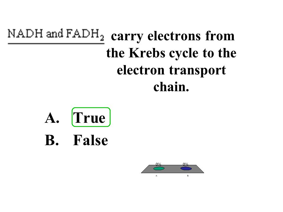 carry electrons from the Krebs cycle to the electron transport chain.