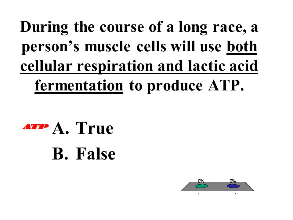 During the course of a long race, a person's muscle cells will use both cellular respiration and lactic acid fermentation to produce ATP.