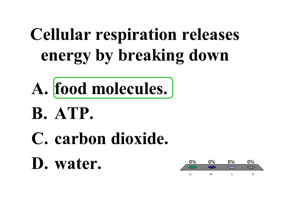 Cellular respiration releases energy by breaking down