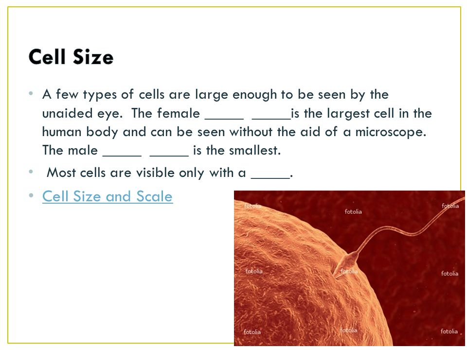 Cell Size Cell Size and Scale