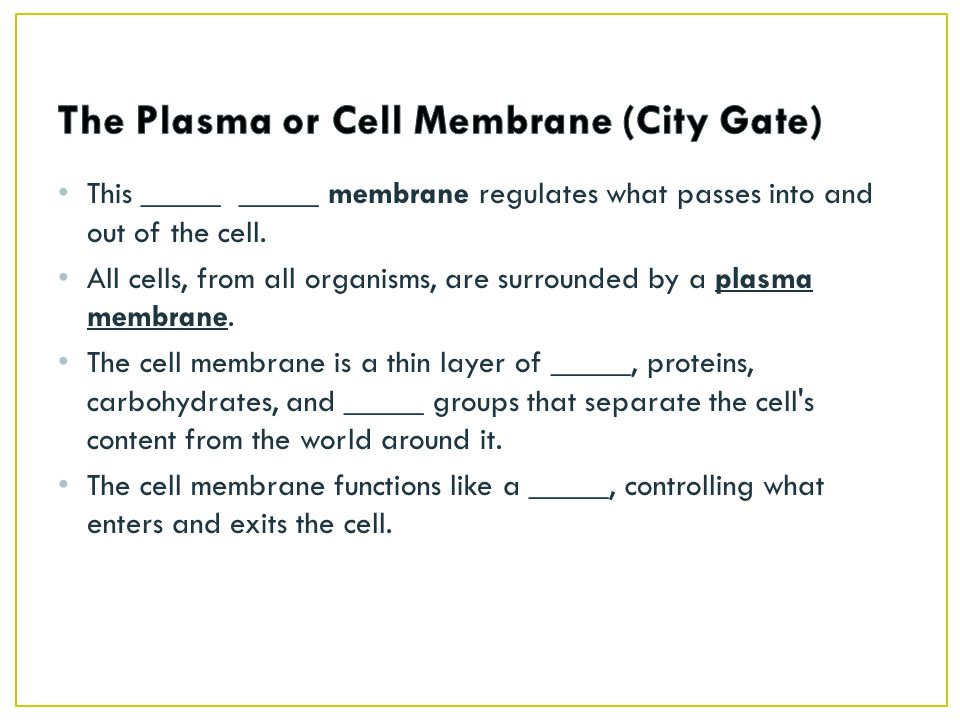 The Plasma or Cell Membrane (City Gate)