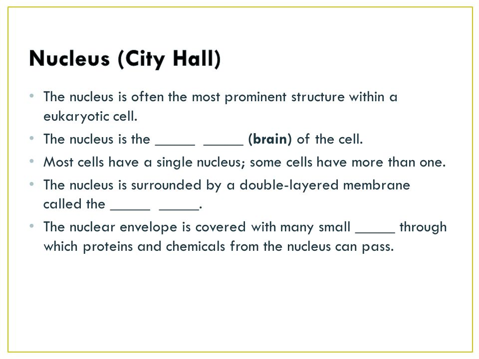 Nucleus (City Hall) The nucleus is often the most prominent structure within a eukaryotic cell. The nucleus is the _____ _____ (brain) of the cell.
