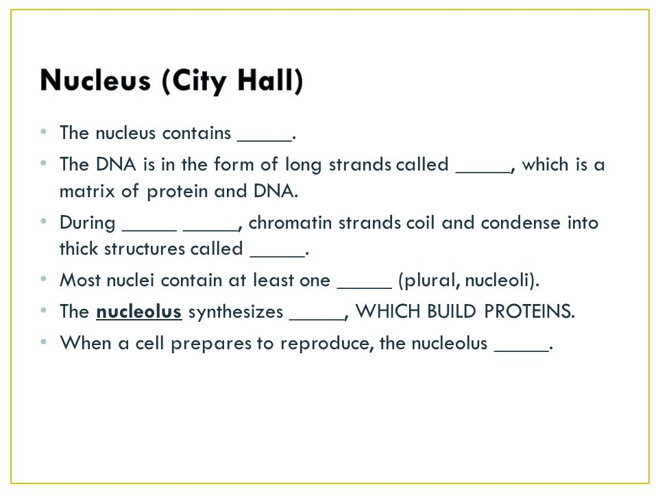 Nucleus (City Hall) The nucleus contains _____.