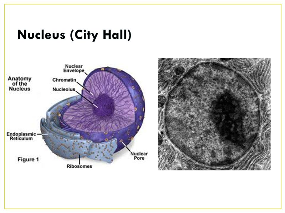 Nucleus (City Hall)