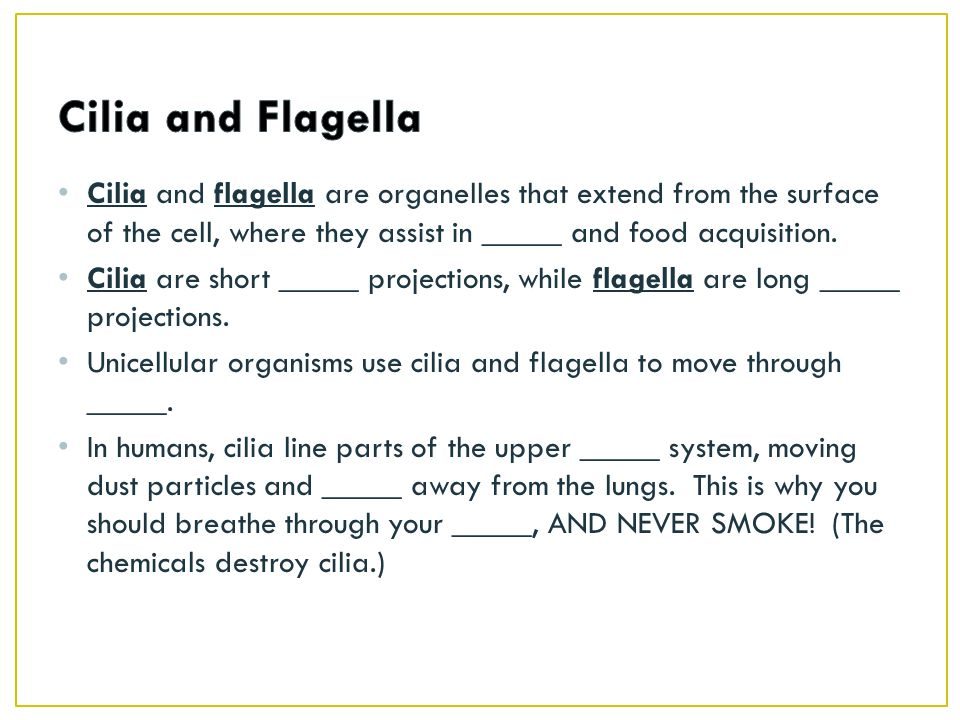 Cilia and Flagella Cilia and flagella are organelles that extend from the surface of the cell, where they assist in _____ and food acquisition.