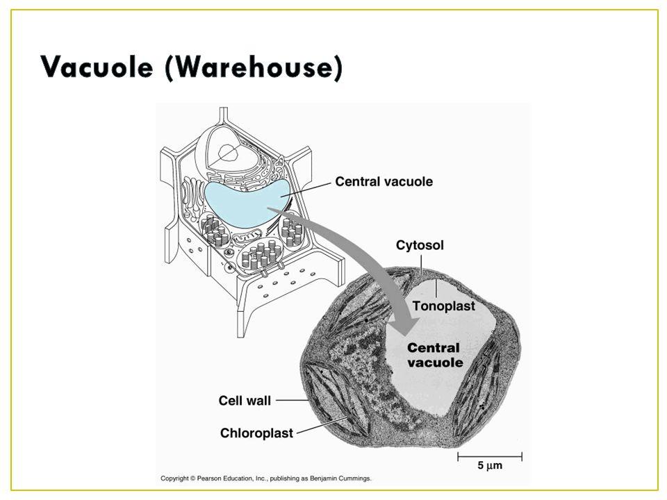 Vacuole (Warehouse)