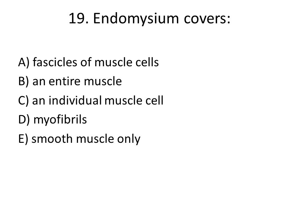 19. Endomysium covers: A) fascicles of muscle cells