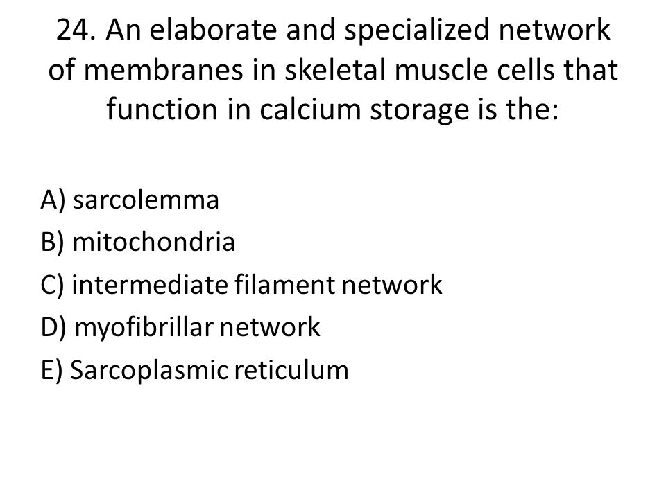24. An elaborate and specialized network of membranes in skeletal muscle cells that function in calcium storage is the: