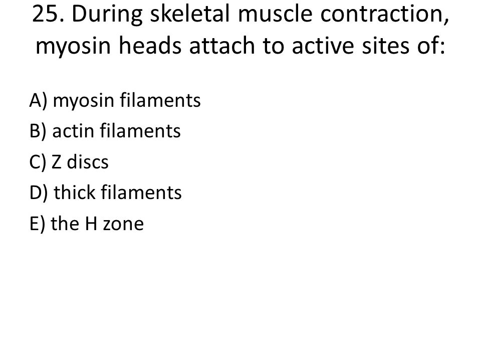 25. During skeletal muscle contraction, myosin heads attach to active sites of:
