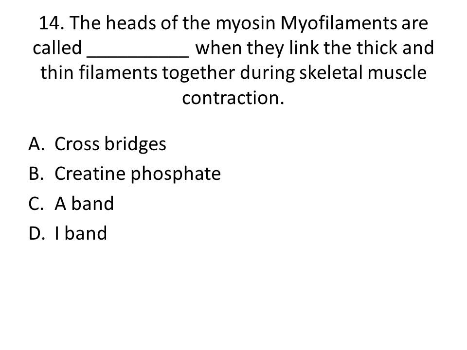 14. The heads of the myosin Myofilaments are called __________ when they link the thick and thin filaments together during skeletal muscle contraction.