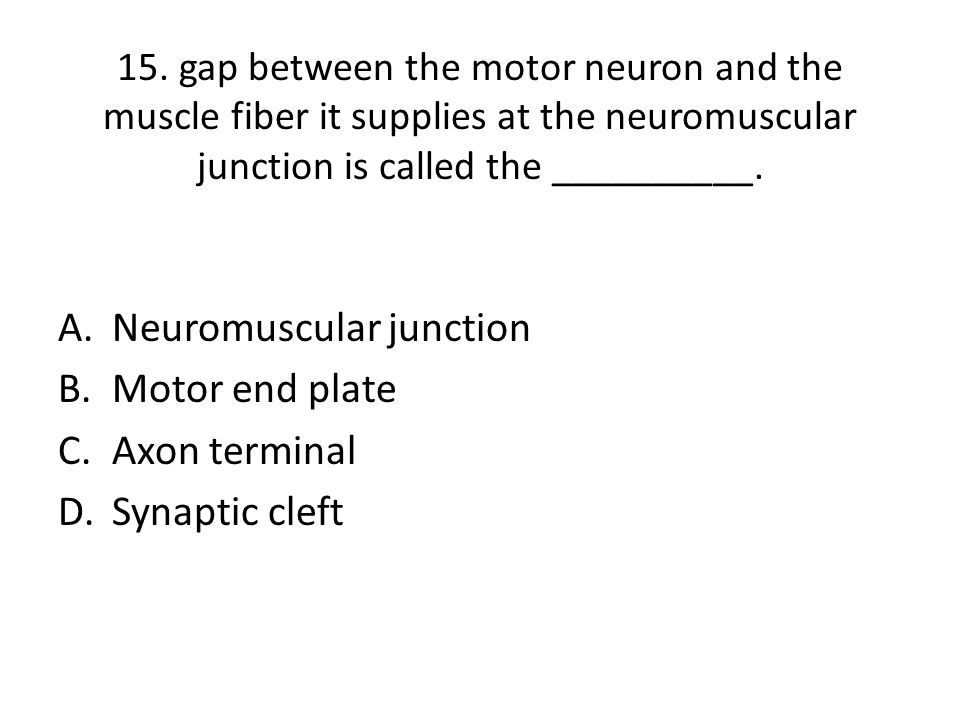Neuromuscular junction Motor end plate Axon terminal Synaptic cleft