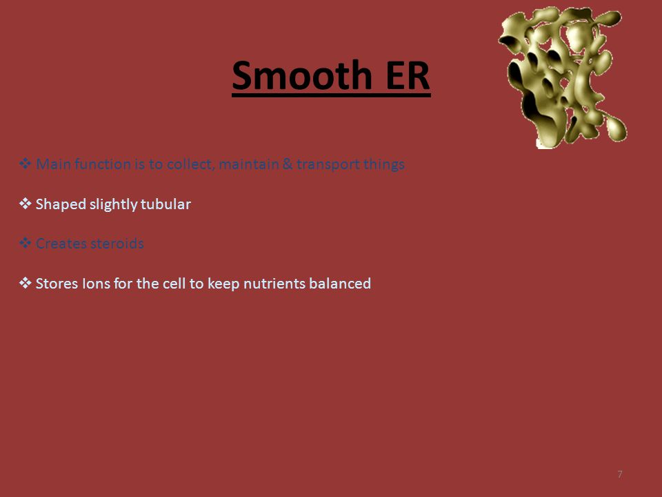 Smooth ER Main function is to collect, maintain & transport things