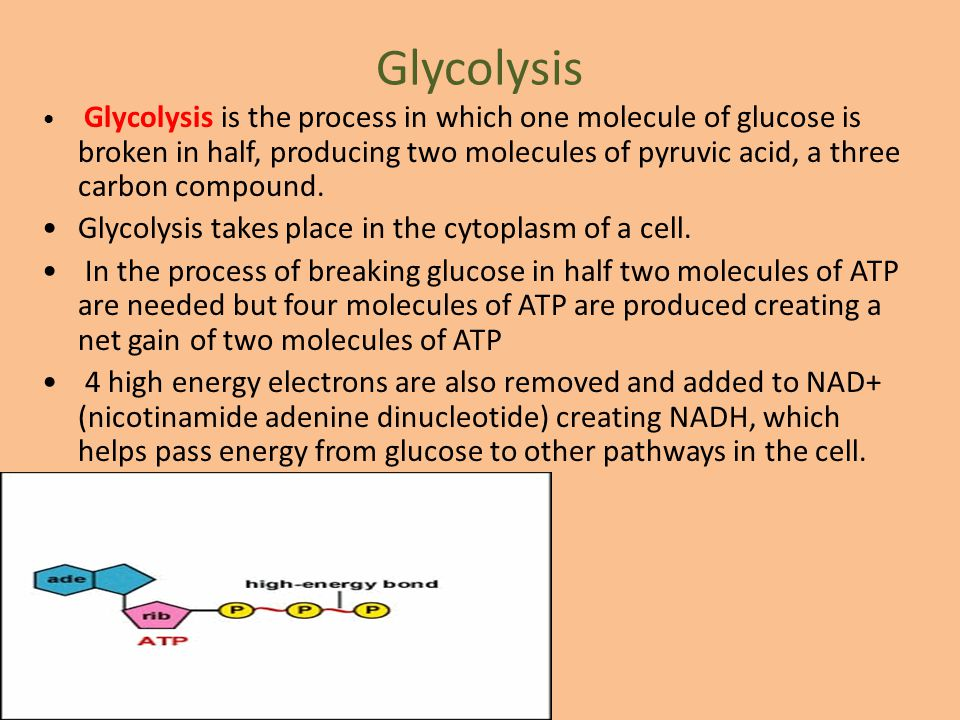 Glycolysis Glycolysis takes place in the cytoplasm of a cell.