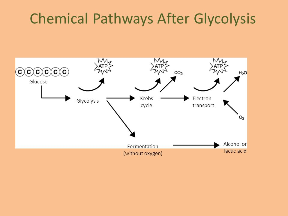 Chemical Pathways After Glycolysis