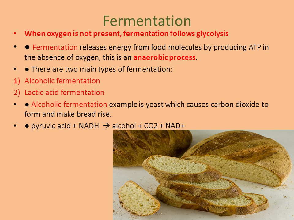Fermentation When oxygen is not present, fermentation follows glycolysis.