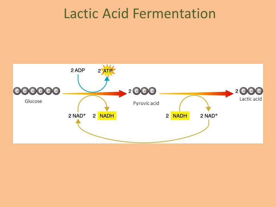 Cellular Respiration. - ppt video online download