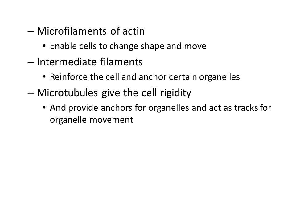 Microfilaments of actin Intermediate filaments