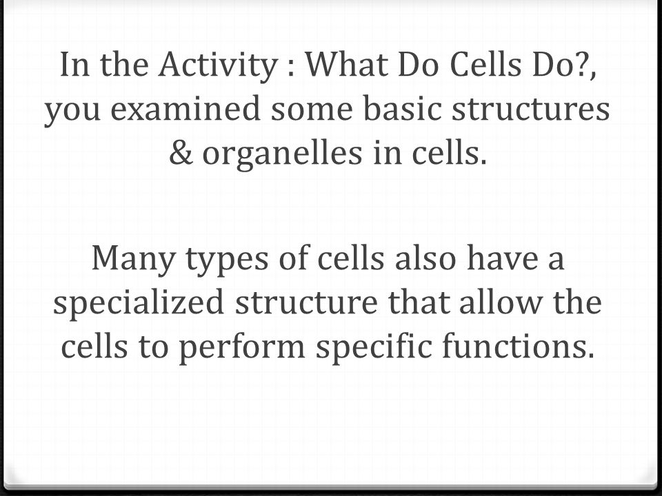 In the Activity : What Do Cells Do