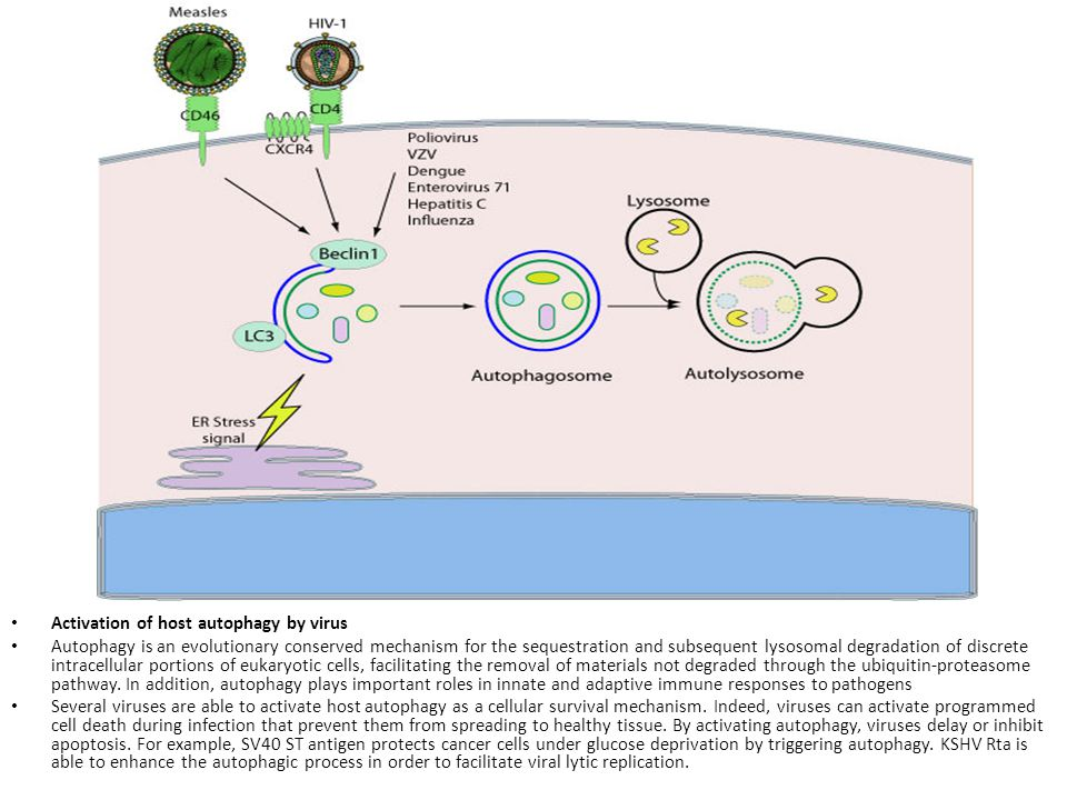 Activation of host autophagy by virus