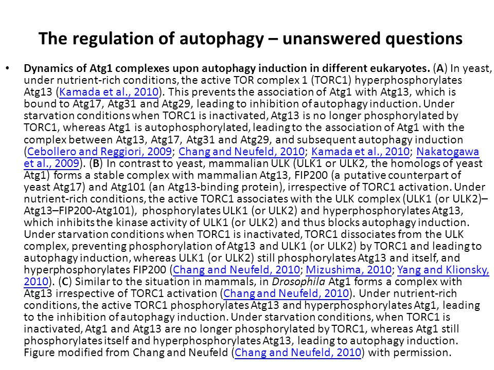 The regulation of autophagy – unanswered questions